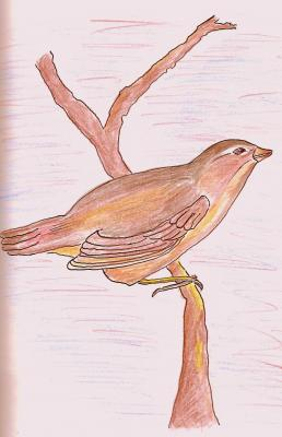 Sobre la rama